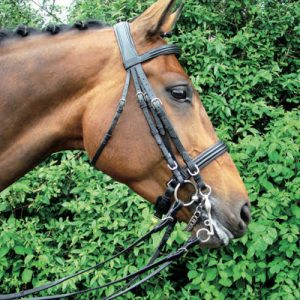 amerigo-double-bridle