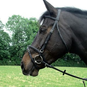 amerigo-flash-bridle